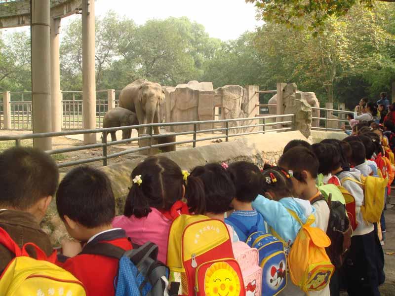 动物朋友 我们喜欢你——记田林四幼中班上海动物园秋游活动